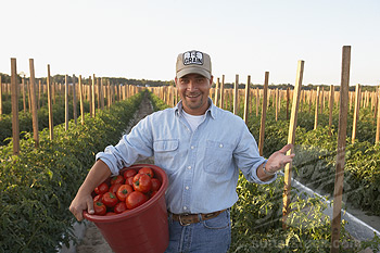 South Georgia depends on  immigrant workers to  harvest crops.