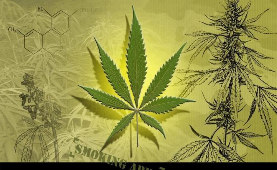 header - marijuana wall paper