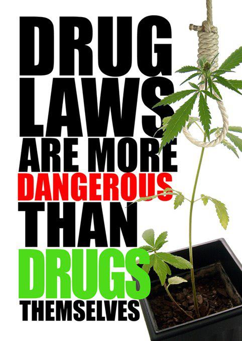 marijuana = drug laws more dangerous than drug