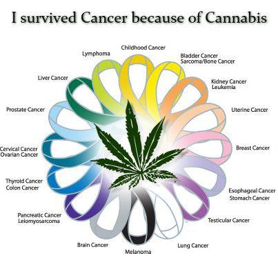 Marijuana - I survived cancer
