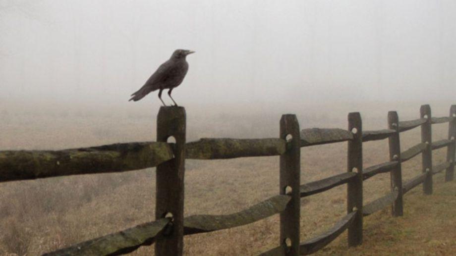 crow-on-fence
